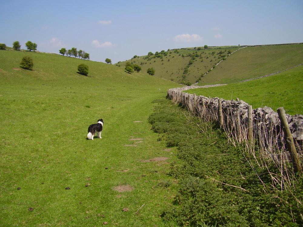 Deep Dale dog walk, Derbyshire - Peak District dog walk
