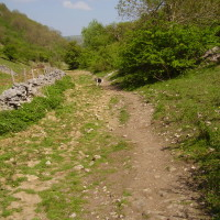 Deep Dale dog walk, Derbyshire - Peak District dog walk