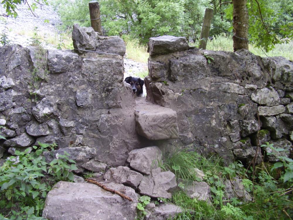 Scenic dale dog walk with two dog-friendly pubs, Derbyshire - Dog walks in Derbyshire