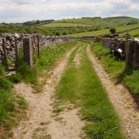 Hartington dog walk and dog-friendly pubs, Derbyshire - Image 11
