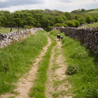 Hartington dog walk and dog-friendly pubs, Derbyshire - Dog walks in Derbyshire