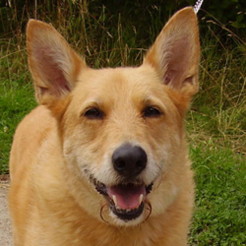 Wansdyke Woodlands dog walk, Wiltshire - Dog walks in Wiltshire