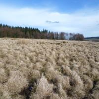 Dog walk near Ruthin, Wales - Dog walks in Wales