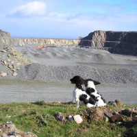 A55 dog-friendly beach near Conwy, Wales - Dog walks in Wales