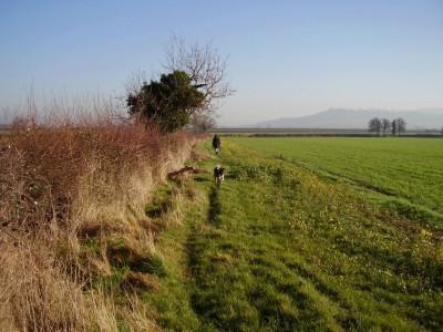 Pamington circular dog walk, Gloucestershire - Driving with Dogs