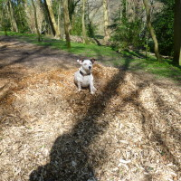 Dover dog walk and cafe, Kent - Dog walks in Kent