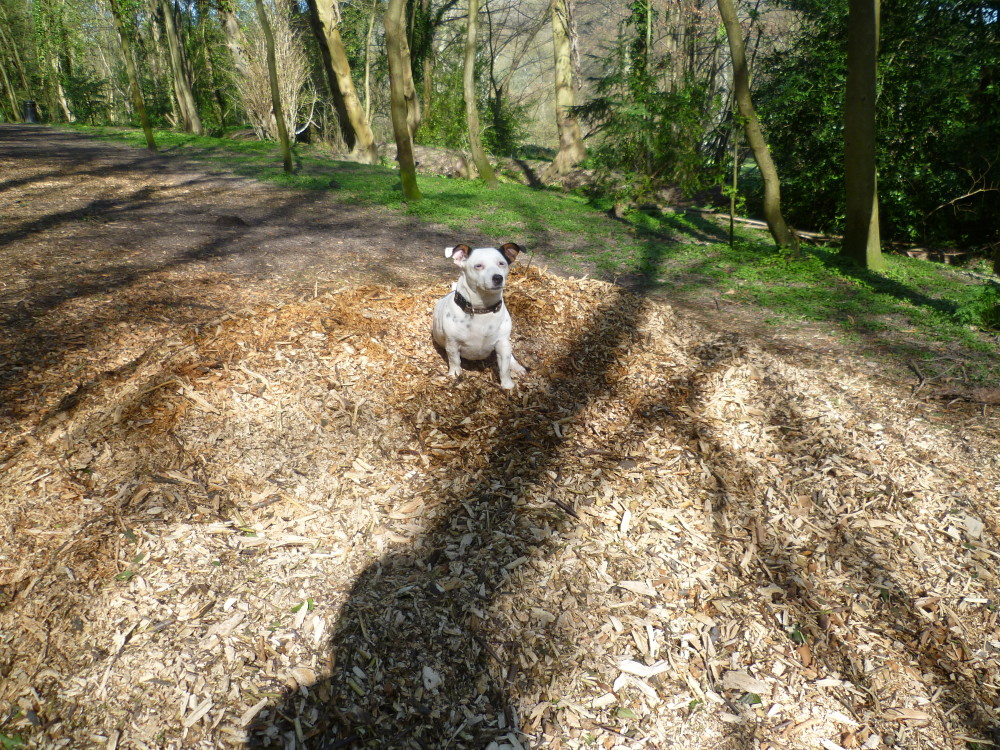 Dover dog walk and cafe, Kent - Dog walks in Kent