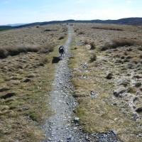 A5 dog walk near Betws-y-Coed, Clwyd, Wales - Dog walks in Wales