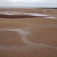 A1 dog-friendly beach near Dunbar, Scotland - Dog walks in Scotland