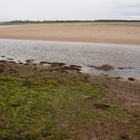 A1 dog-friendly beach near Dunbar, Scotland - Dog walks in Scotland