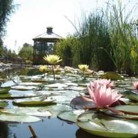 Water gardens of Moulin des Vernes - dog-friendly, France - Image 1