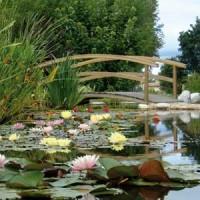 Water gardens of Moulin des Vernes - dog-friendly, France - Image 4