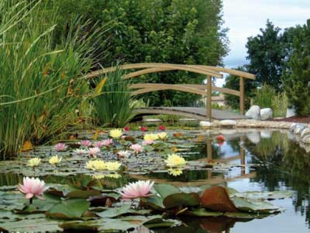 Water gardens of Moulin des Vernes - dog-friendly, France - Image 4