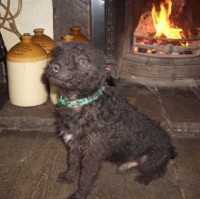 Masham dog-friendly pub, North Yorkshire - Dog walks in Yorkshire
