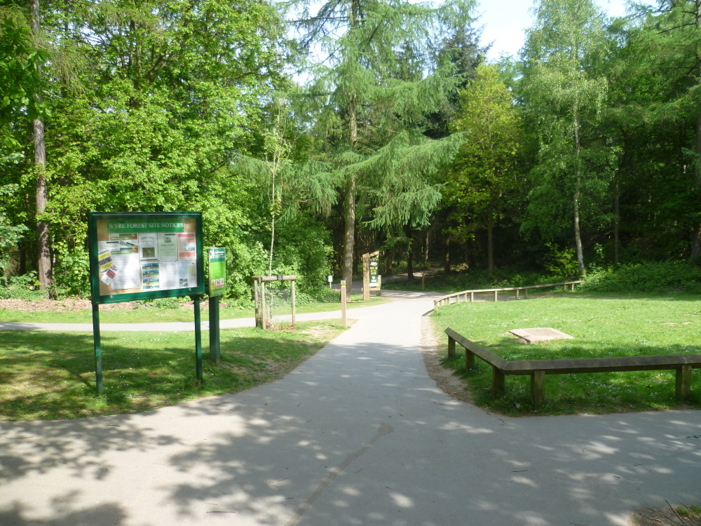 A456 Forest dog walks, cafe and doggie shower, Worcestershire - Dog walks in Worcestershire