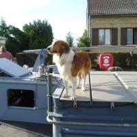 A26 exit 14 Aisnes canal dog walk, France - Image 1