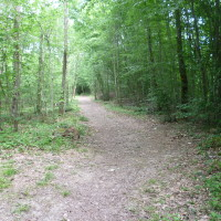 A26 exit 23 dog walk in Lusigny, France - Image 4
