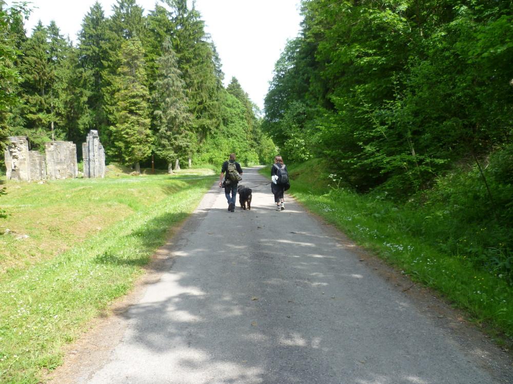 Verdun area dog walk, France - Image 2
