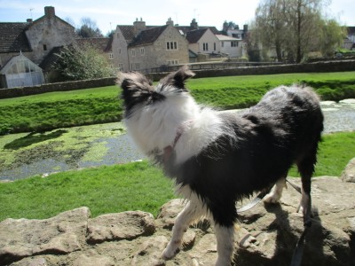 Romantic ruined castle and cafe, Somerset - Driving with Dogs