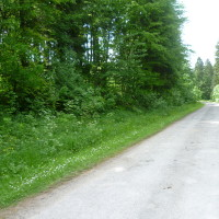 Verdun area dog walk, France - Image 4