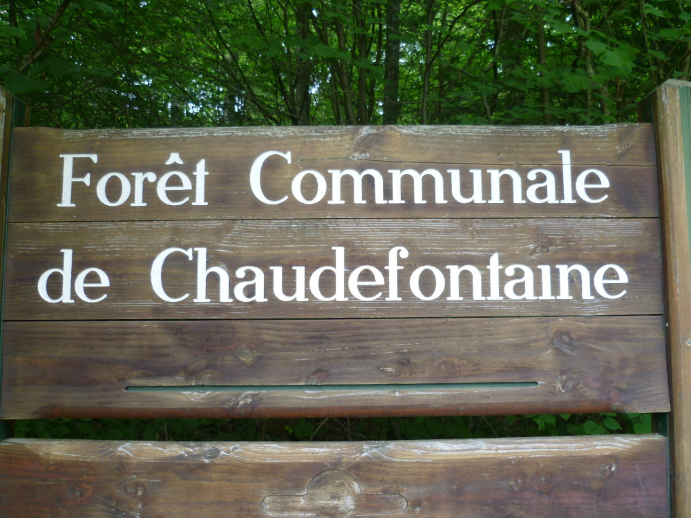 A4 Exit 29 Forest Dog Walk, France - Image 1