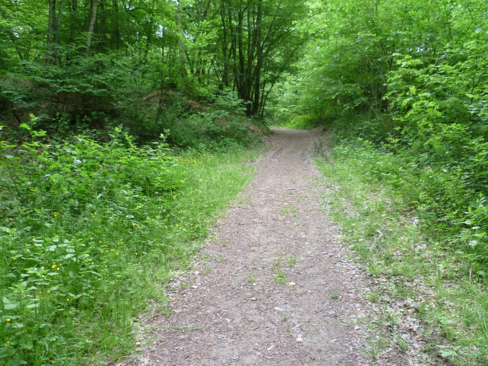 A4 Exit 29 Forest Dog Walk, France - Image 3