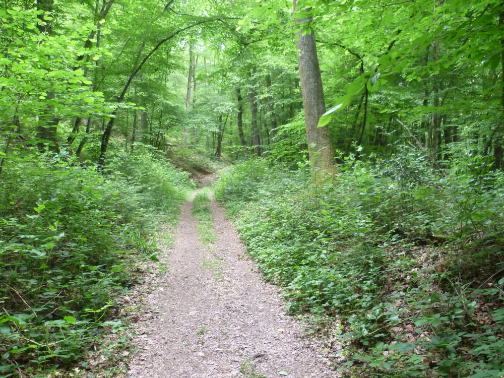 A4 Exit 29 Forest Dog Walk, France - Image 4