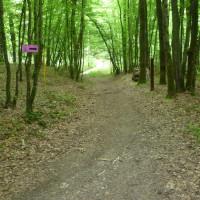 A4 Exit 29 Forest Dog Walk, France - Image 5