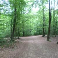 A31 exit 17 dog walk near Nancy, France - Image 1