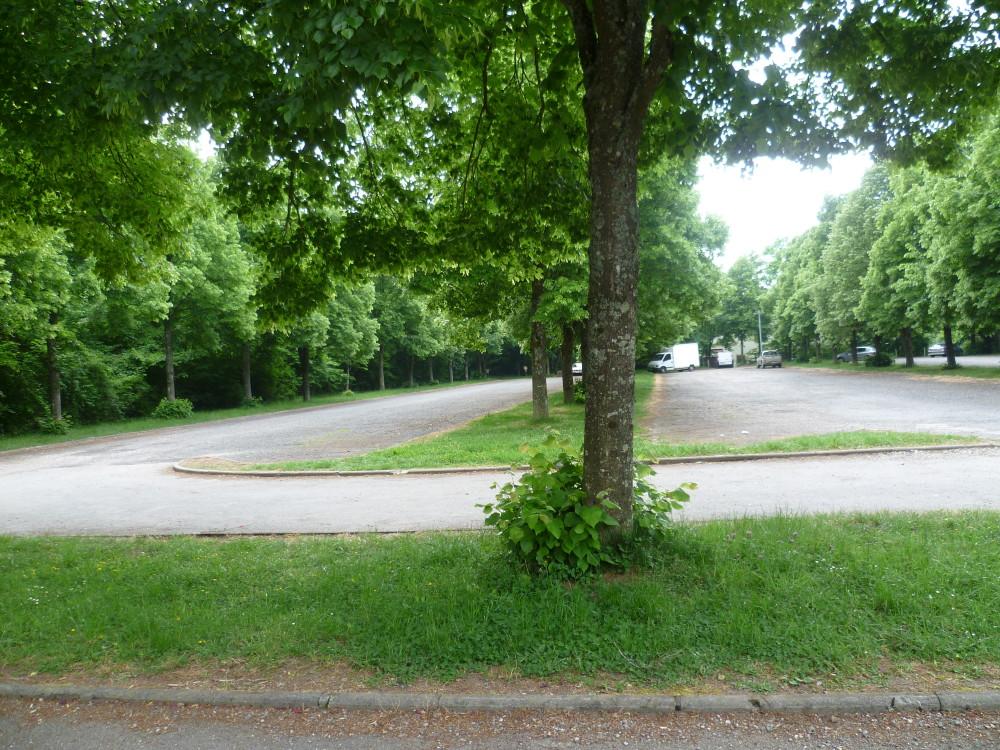 A31 exit 17 dog walk near Nancy, France - Image 4