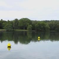 Lake Kir dog swimming, Dijon, France - Image 4