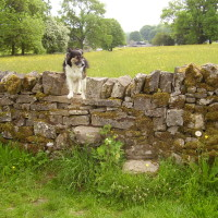 Tissington dog walk, Derbyshire - Image 13