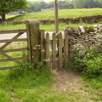 Tissington dog walk, Derbyshire - Image 15