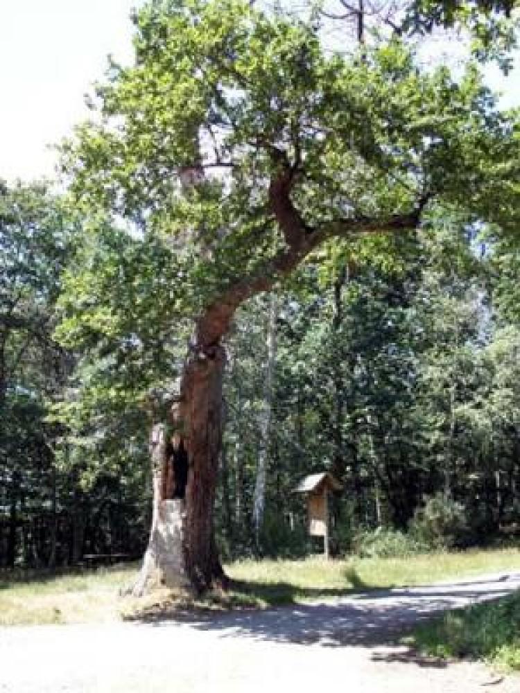A64 exit 17 Dog walk at L'Arboretum de Cardeilhac, France - Image 1
