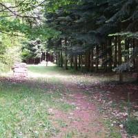 A64 exit 17 Dog walk at L'Arboretum de Cardeilhac, France - Image 2