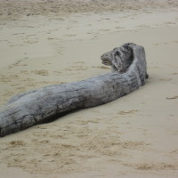 Dog-friendly beach near Arcachon, France - Image 2
