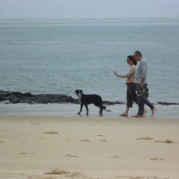 Dog-friendly beach near Arcachon, France - Image 3