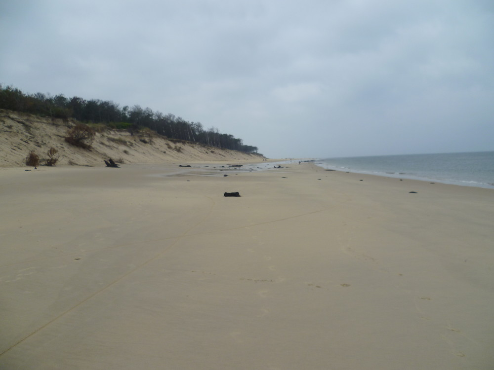 Dog-friendly beach near Arcachon, France - Image 4