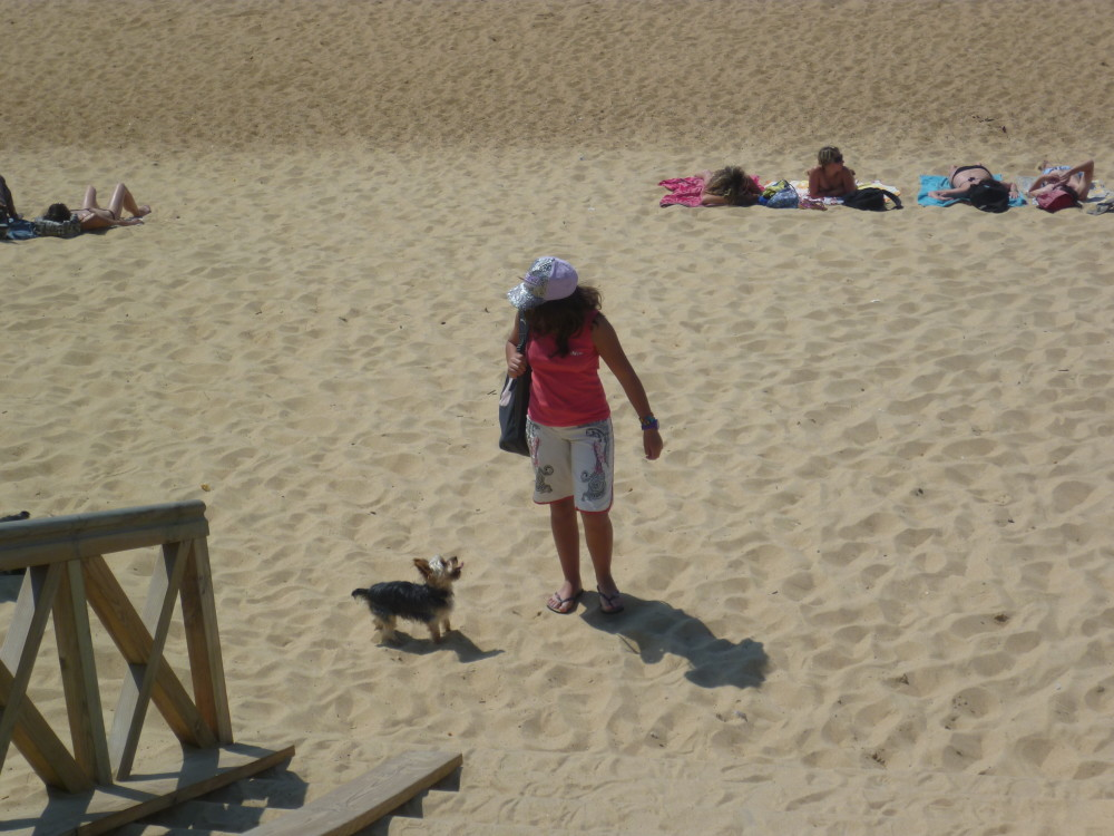 A63 exit 7 dog walk on the beach near Ondres, France - Image 1
