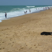 A63 exit 7 dog walk on the beach near Ondres, France - Image 2