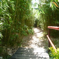 A62 Exit 9 Dog walk in a Bamboo Park, France - Image 1