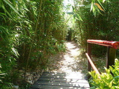 A62 Exit 9 Dog walk in a Bamboo Park, France - Driving with Dogs