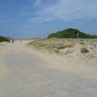 A63 exit 7 dog walk on the beach near Ondres, France - Image 3