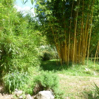 A62 Exit 9 Dog walk in a Bamboo Park, France - Image 3