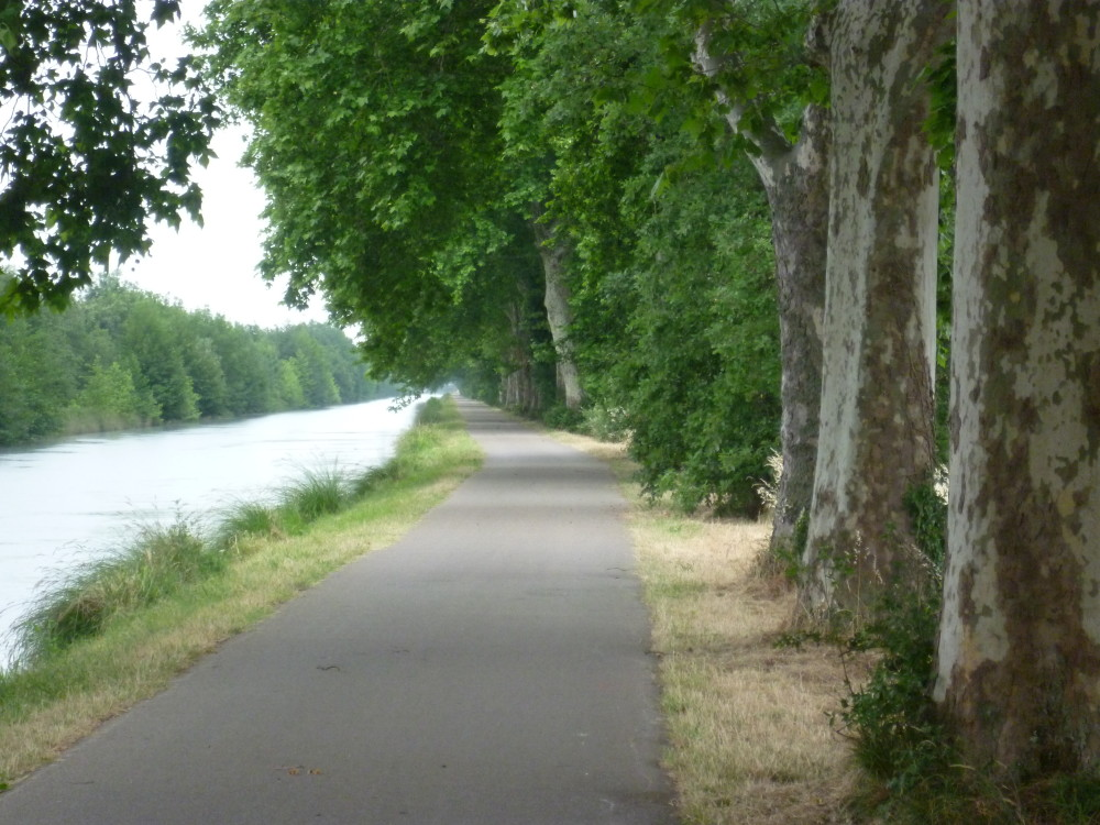 A62 Exit 11 a dog walk by the Garonne river, France - Image 3
