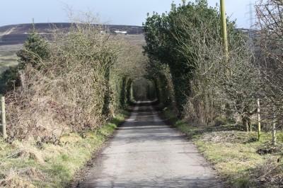 Wild Bank Hill dog walk near Stalybridge, Cheshire - Driving with Dogs