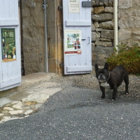 A20 exit 53 Turenne doggiestop, France - Image 3