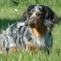 Tandle Hill dog walks, Lancashire - Image 1