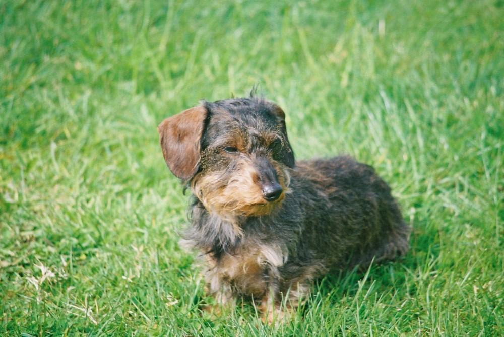 Tandle Hill dog walks, Lancashire - Image 2