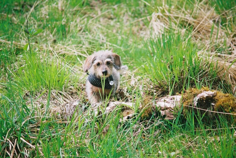 Tandle Hill dog walks, Lancashire - Image 3